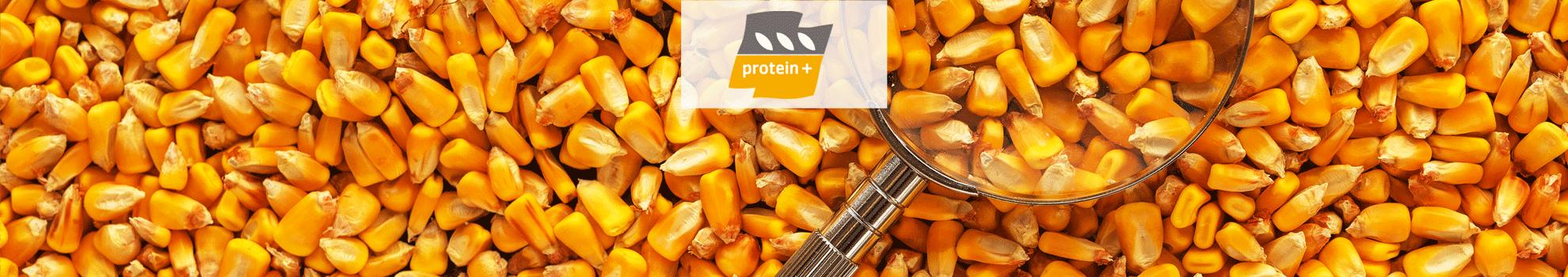 protein +